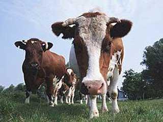 Сбербанк будет выдавать кредиты на приобретение сельхозживотных