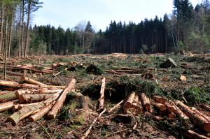 Адыгея рассчитывает восстановить деревообрабатывающую отрасль с помощью господдержки