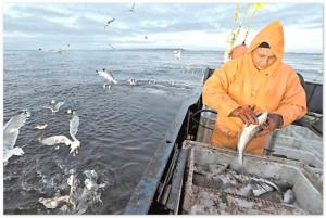 Рыбодобытчики Кубани просят у властей субсидии на оборудование