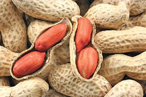 Выращивание арахиса как бизнес