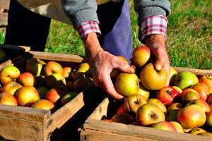 Роль различных игроков в пищевой промышленности