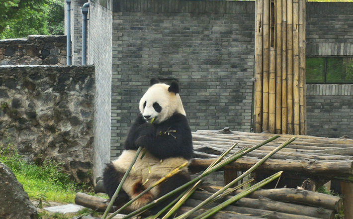 Империя панд