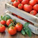В Самаре уничтожили 344 кг санкционных томатов из Турции