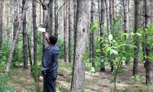 В лесах области установят феромонные ловушки