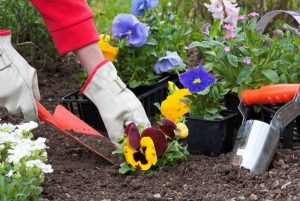 В Самаре от здания администрации Кировского района похитили 188 цветов