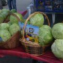 В Ульяновске отпразднуют «День кочана»