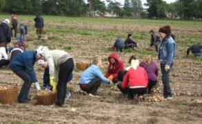 Следственный комитет Россиипроверит информацию о сборах картошки с родителей учеников в РТ