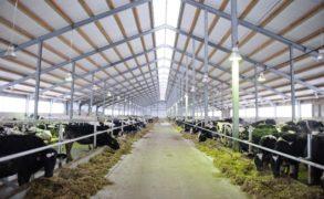 В Татарстане 17 хозяйств получат гранты на реализацию животноводческих проектов