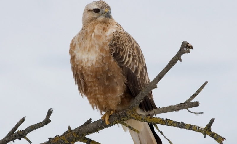 Костромская прокуратура обнаружила в «Романовом лесу» редчайших птиц из Красной книги