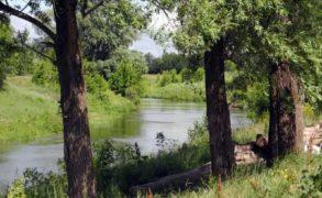 В «Нижней Каме» заложили аллею в честь Года экологии и особо охраняемых природных территорий