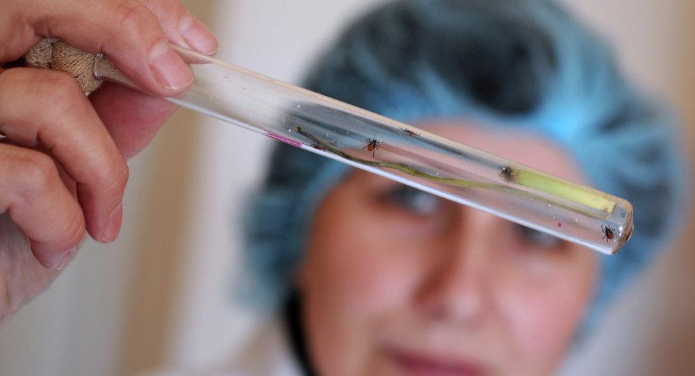 В Самарской области от укусов клещей пострадали более пяти тысяч человек