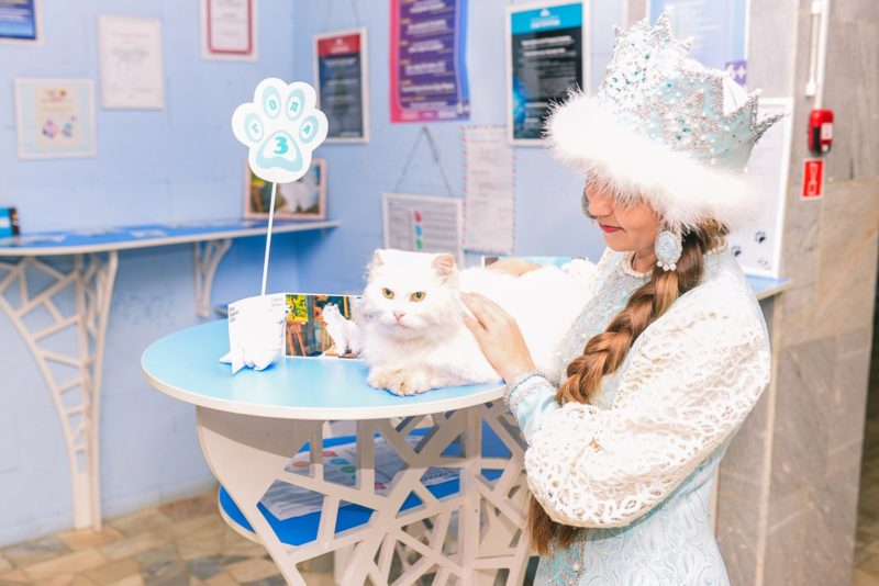 Кот костромской Снегурочки поразил своим унылым видом