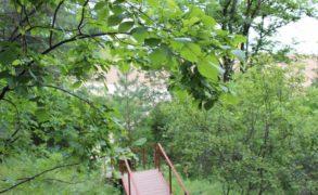 «Парк доброты» создадут студенты Елабуги