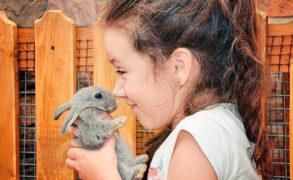 В России планируют запретить работу контактных зоопарков