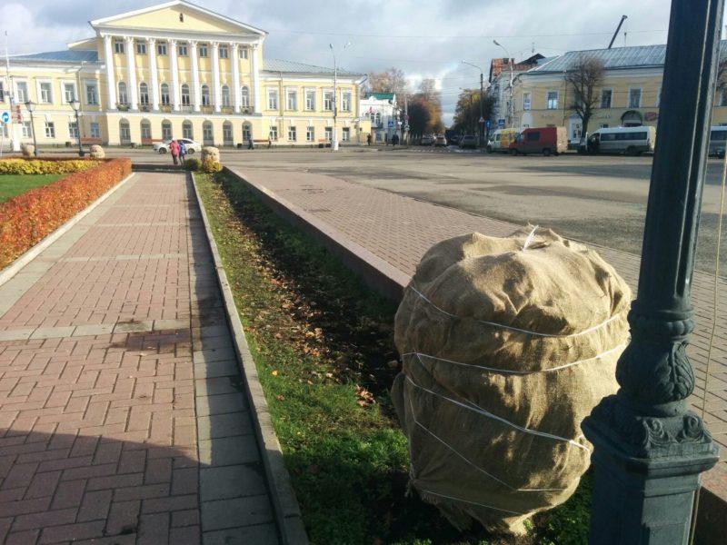 Кусты в центре Костромы уже закрыли от снега