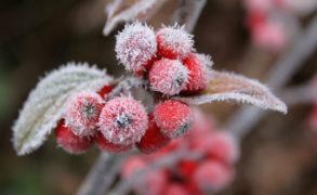 Синоптики рассказали, какой будет зима-2018 в Татарстане