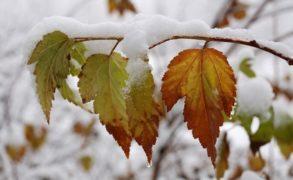 Скоро ли ждать снега, проверим по народным приметам