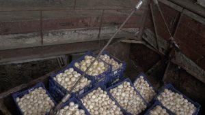 Самарские таможенники обнаружили 250 кг санкционных шампиньонов