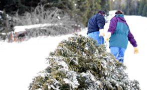 В Татарстане в преддверии Нового года усилят патрулирование лесов