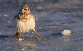 Синоптики Татарстана предупредили об ухудшении погодных условий